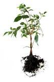 mały drzewo Fotografia Royalty Free