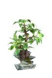 mały drzewo Zdjęcia Stock
