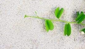 Mały drzewo na piasku Fotografia Stock