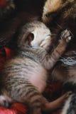 Mały figlarka kot Obrazy Stock