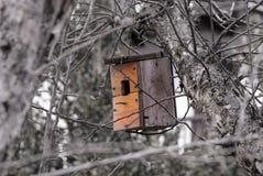 Mały gniazdeczko dla ptaków obraz royalty free
