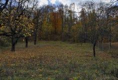 Mały halny sad w jesieni, Lakatnik Zdjęcie Royalty Free