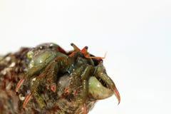 Mały homar Zdjęcia Stock