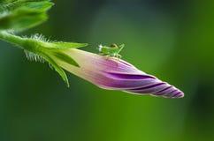 Mały insekt Zdjęcia Stock