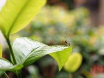 Mały insekt Zdjęcie Stock