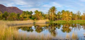 Mały jezioro w palmowym gaju Zdjęcie Stock