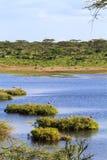 Mały jezioro w Serengeti Tanzania, Afryka Fotografia Royalty Free