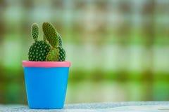 mały kaktus zdjęcie stock