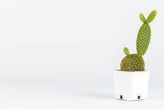 mały kaktus Fotografia Royalty Free
