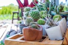 Mały kaktus w kwiatu garnku Zdjęcia Stock