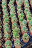 mały kaktusowy garnek Fotografia Royalty Free