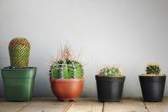 mały kaktusowy garnek Obraz Stock
