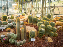 Mały kaktusowy utrzymanie w grupie Obrazy Stock