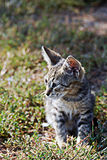 Mały kot fotografia royalty free