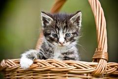 Mały kot Obraz Royalty Free