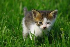 mały kot Obrazy Stock