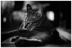 mały kot Fotografia Stock