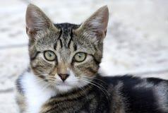 mały kot Zdjęcie Stock