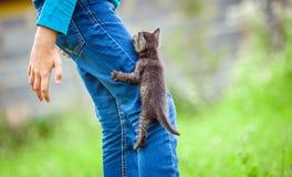 Mały kot, plenerowy Fotografia Stock