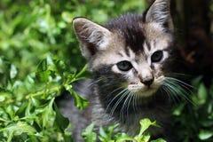 Mały kot w mój podwórku 1 zdjęcie stock