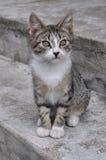 Mały kot w schodkach Zdjęcia Stock
