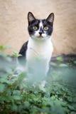 Mały kota dopatrywanie w ogródzie Zdjęcie Royalty Free