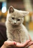 mały kotek Obrazy Royalty Free