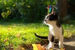 mały kotek Zdjęcie Stock