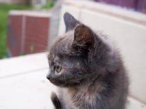 mały kotek zdjęcia royalty free