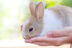mały królik Obraz Stock