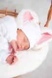 mały królik Zdjęcie Royalty Free