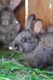 Mały królik jest w hutch Zdjęcie Stock