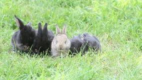 Mały królika obmycie na zielonej trawie zbiory wideo