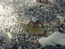 mały kraba eremita Fotografia Stock