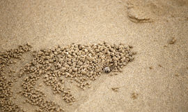mały kraba piasek Obrazy Stock