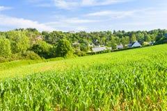 mały kraju kukurydzany pole Obrazy Royalty Free