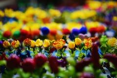 mały kwiat Obraz Stock