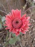 mały kwiat Zdjęcia Royalty Free