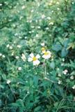 mały kwiat Obrazy Stock