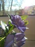mały kwiat Obrazy Royalty Free