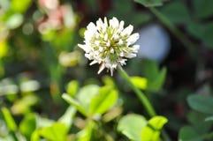 Mały kwiat lub trawa kwiat Zdjęcia Royalty Free
