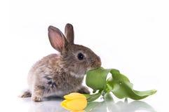 mały kwiatu królik Zdjęcie Stock