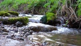 Ma?y lasowy strumie? zdjęcie wideo