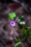 Mały Malutki Microscopical kwiat fotografia royalty free