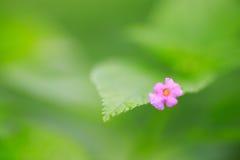 Mały menchia kwiat Zdjęcie Stock