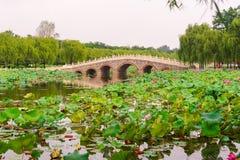 Mały most w lotosowym stawie Fotografia Royalty Free