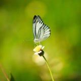 Mały motyl Obraz Stock