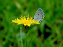 mały motyl Fotografia Stock