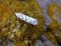 Mały motyl na granicie Obraz Royalty Free