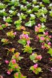 Mały ogród Zdjęcie Stock